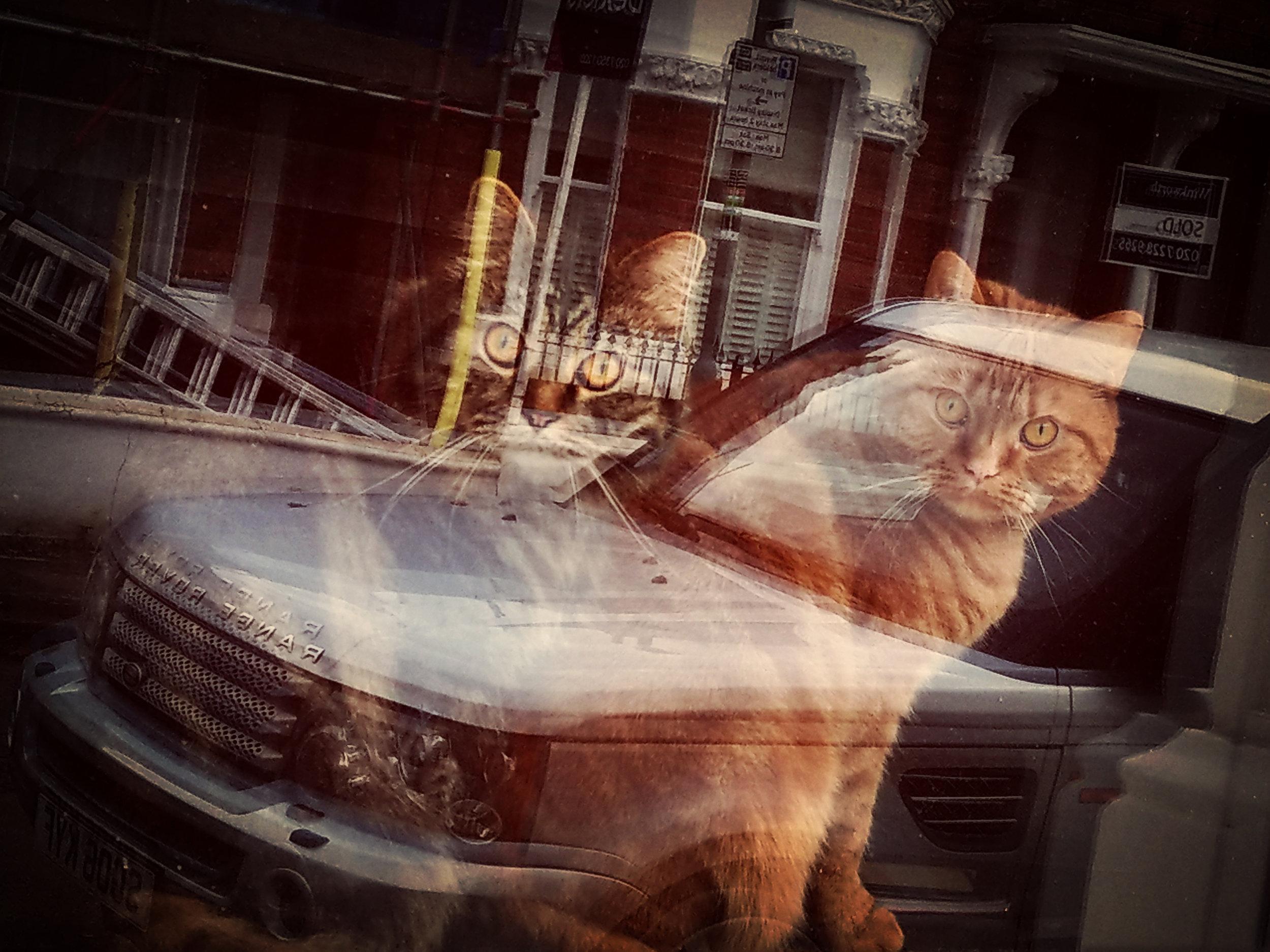 Clapham Cats