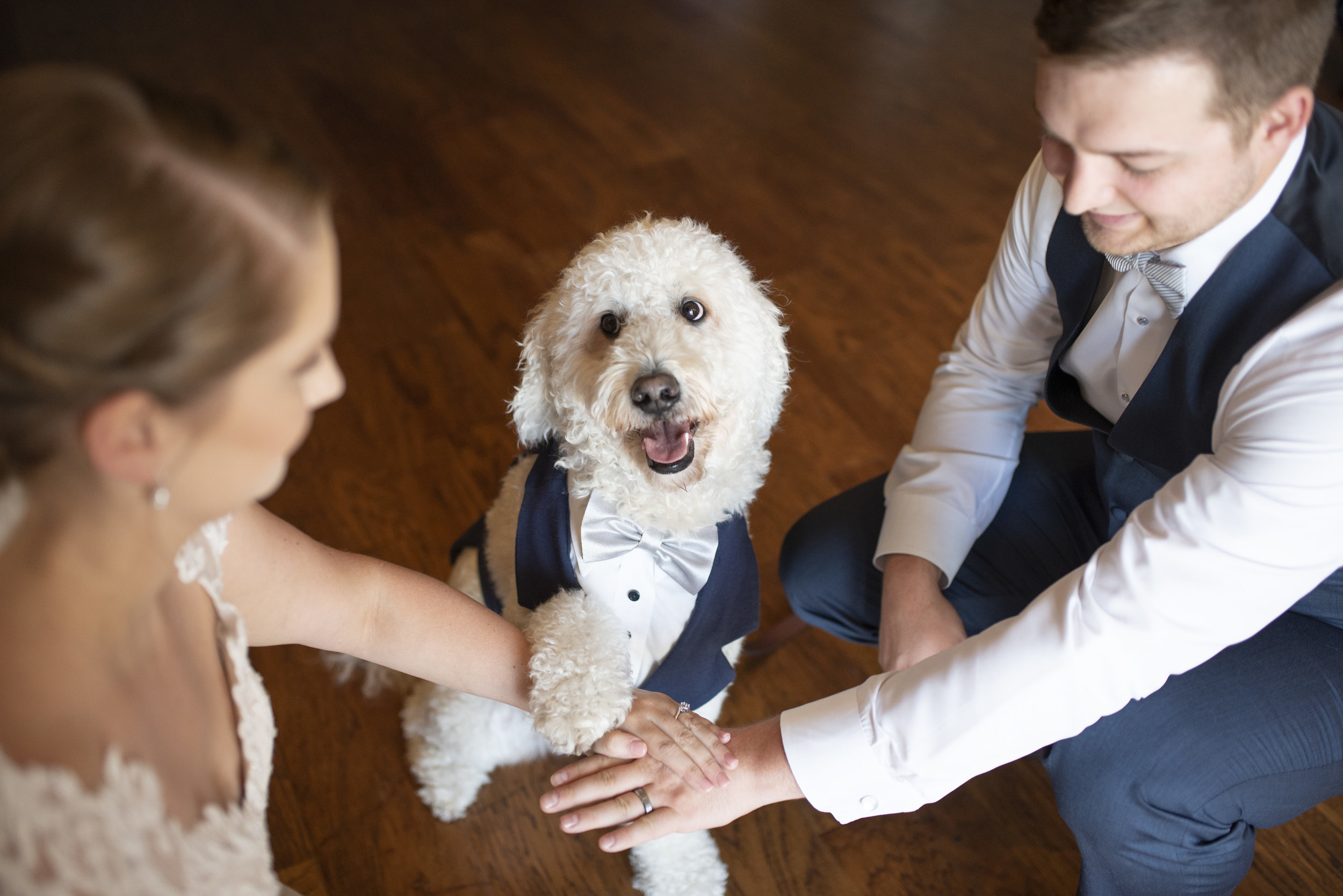 wedding dog.jpg