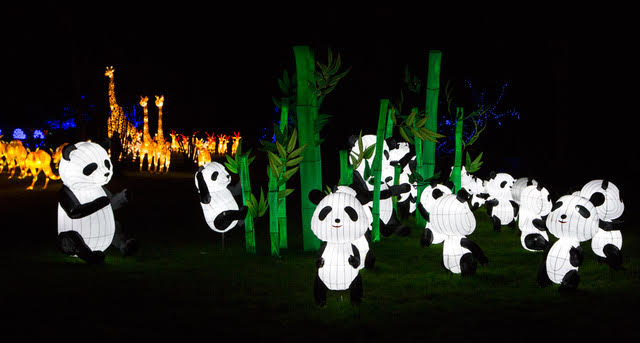 Lantern Festival 6