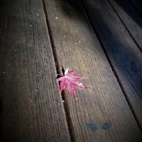 tai chi Fall Leaf.JPG