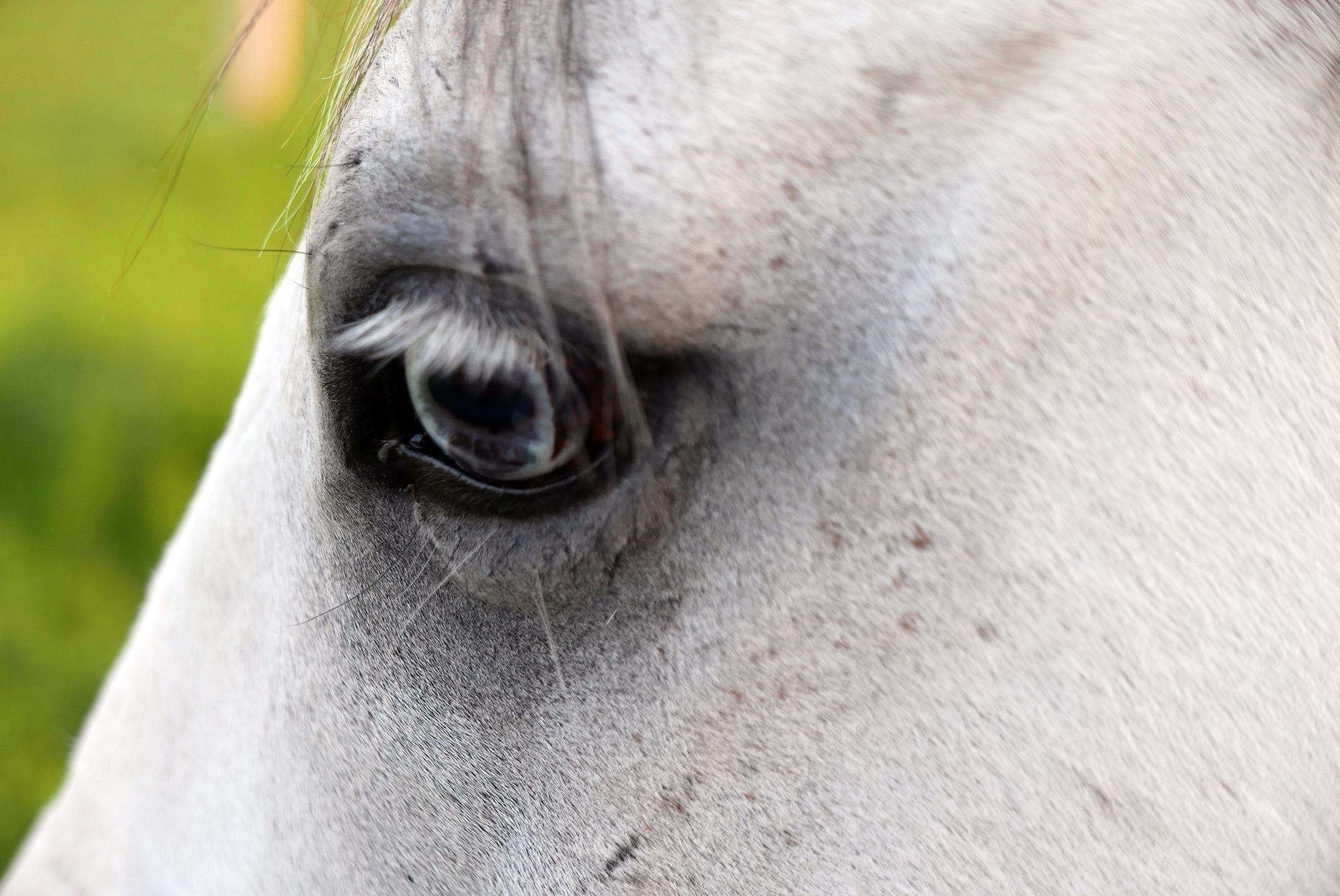Blue's Eye