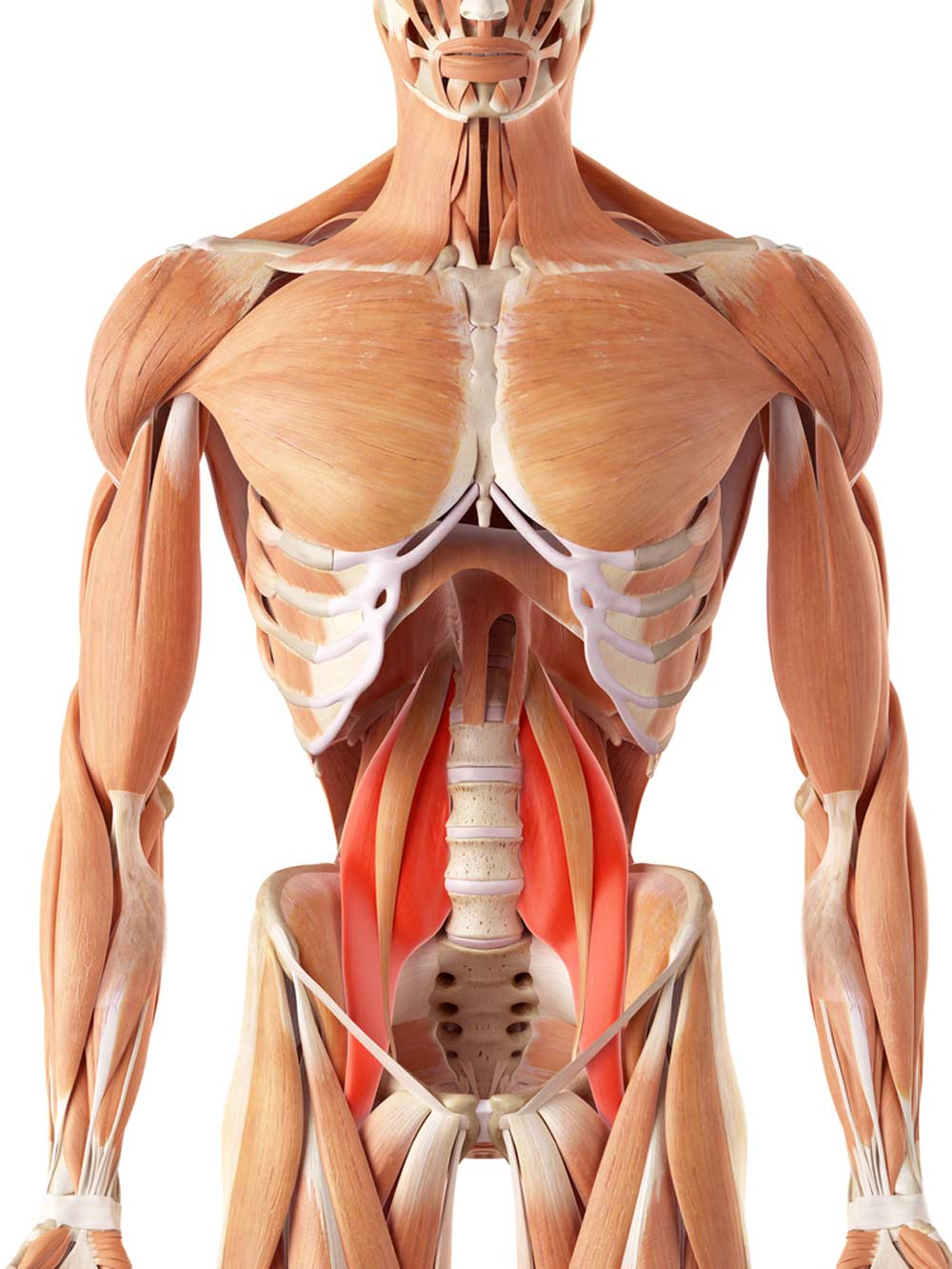(Credit: Cathe.com - The Psoas Muscle)