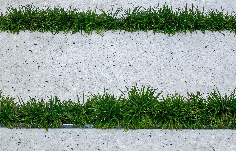 Moss Web image-7.jpg