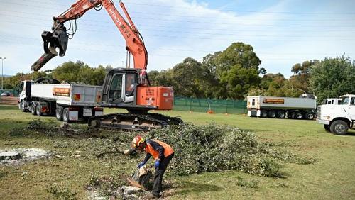 tree+felling3.jpg
