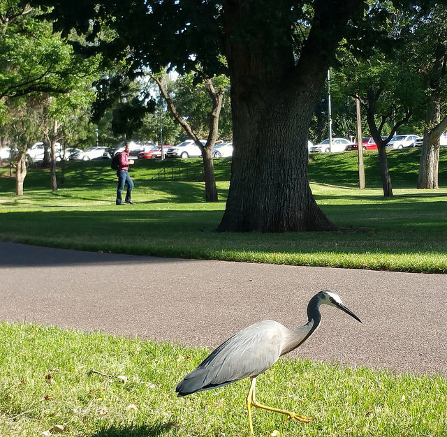The Rundle Park / Kadlitpina (Park 13) photo album: