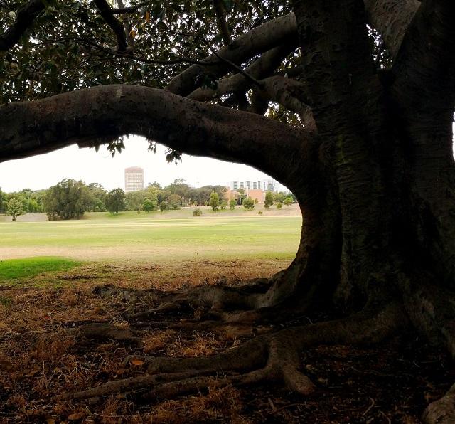 The Ellis Park / Tampawardli (Park 24) photo album