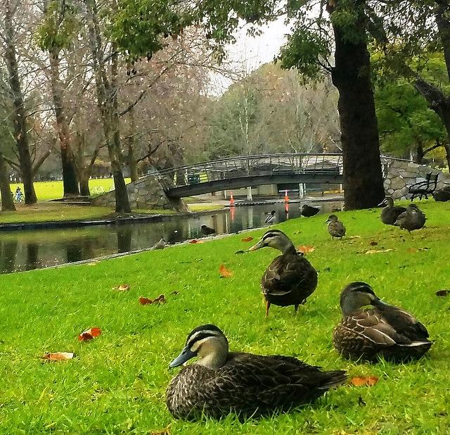 The Rymill Park / Murlawirrapurka (Park 14) photo album