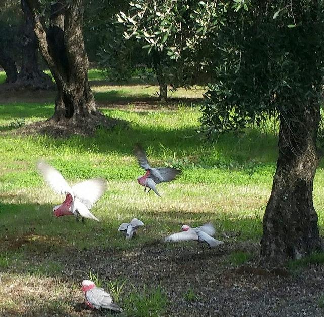 The Olive Groves (Parks 7 & 8) photo album