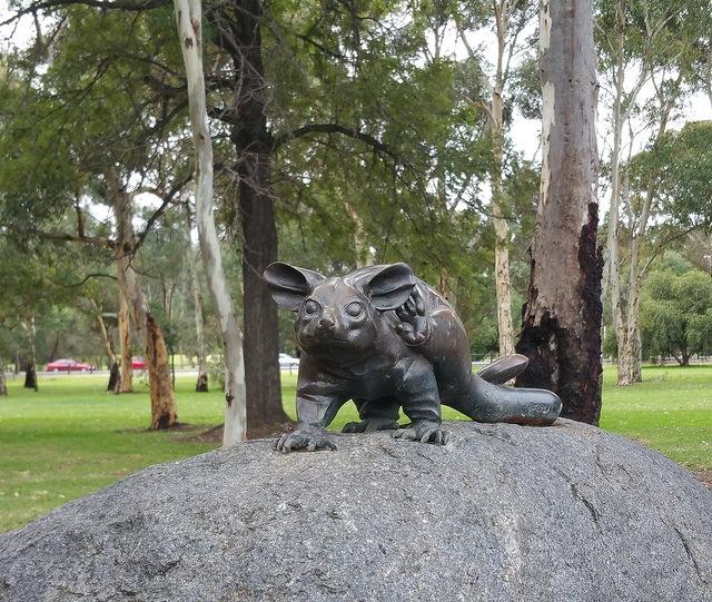Possum Park / Pirltawardli (Park 1) photo album