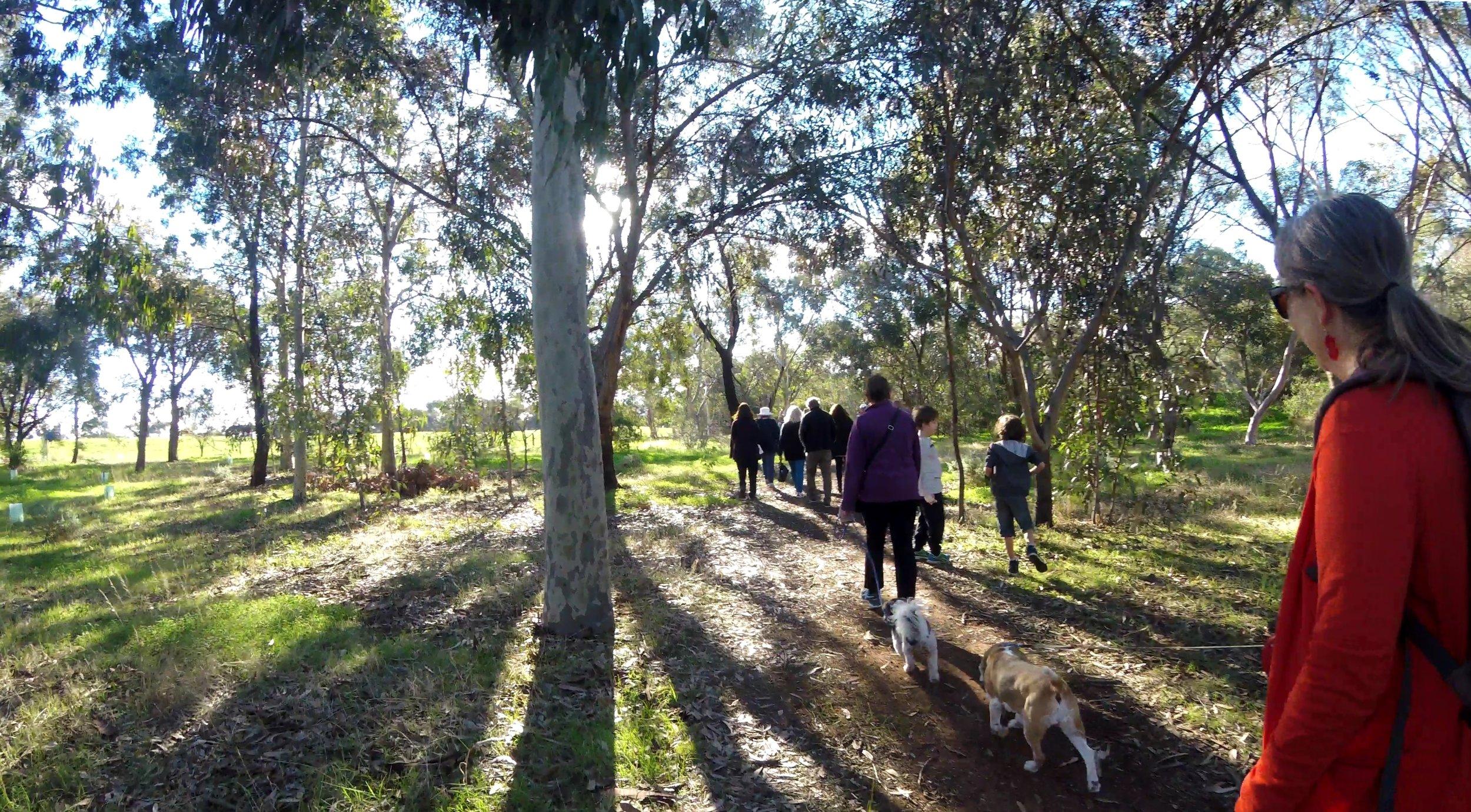 Walking through Lefevre Park / Nantu Wama (Park 6)