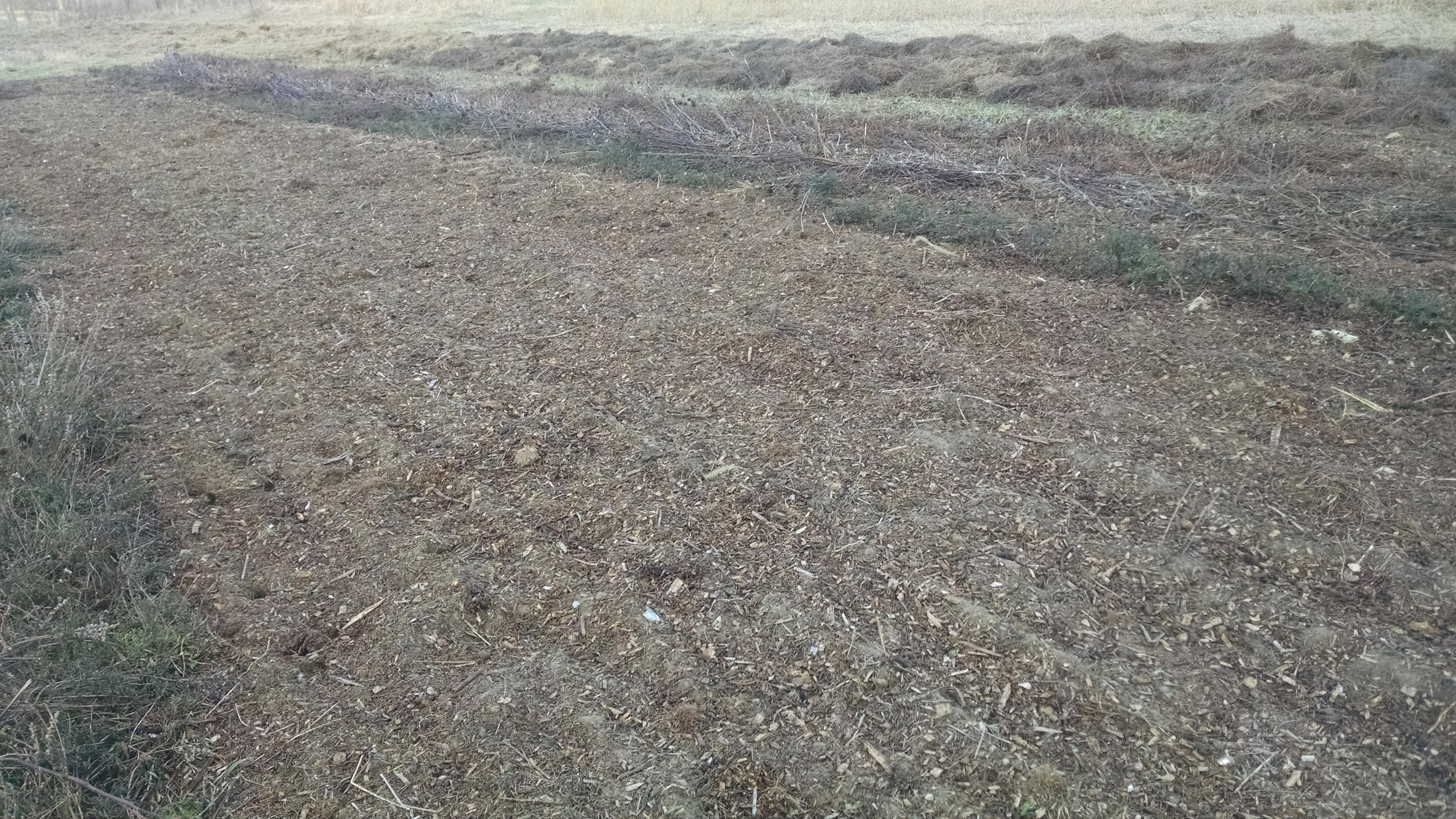 The whole field received manure and wood chips. This section of fall planted mint and garlic received an extra thick layer.