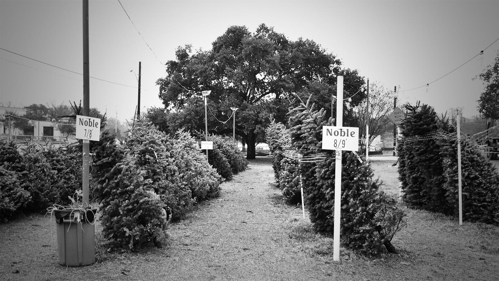 The Tree Lot.jpg