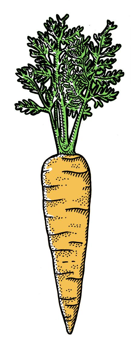 Q+F_Carrot2.jpg