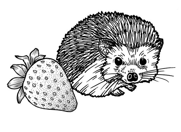 Quercus_Hedgehog_5_Baby_v2_small.jpg