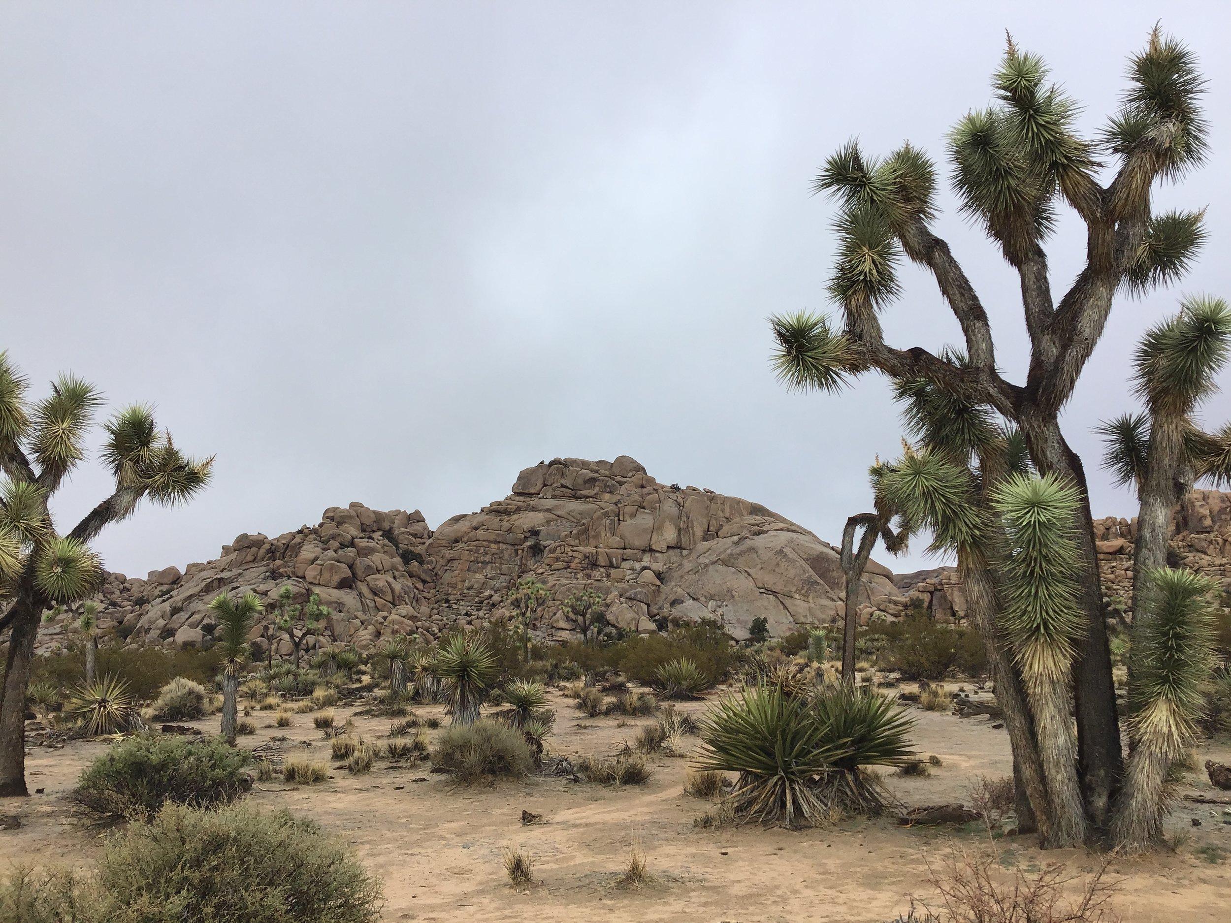 Joshua Tree National Park - Californian desert.