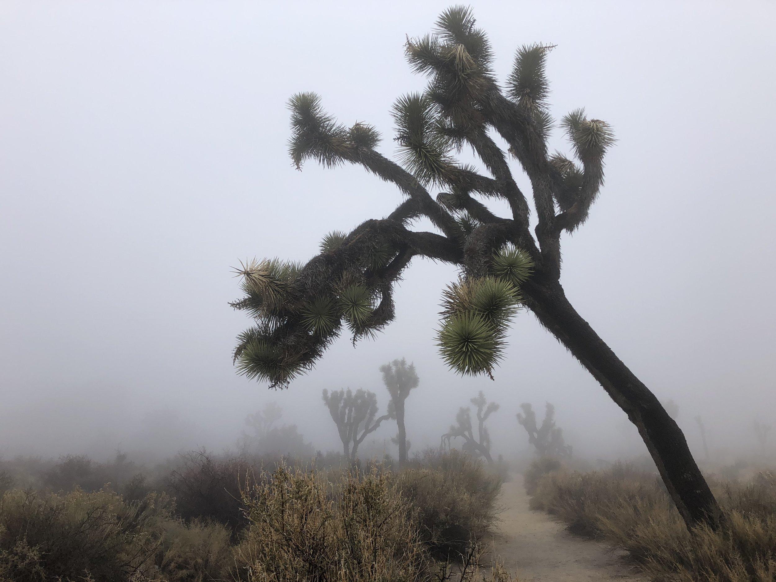 Joshua Tree National Park - magical landscape