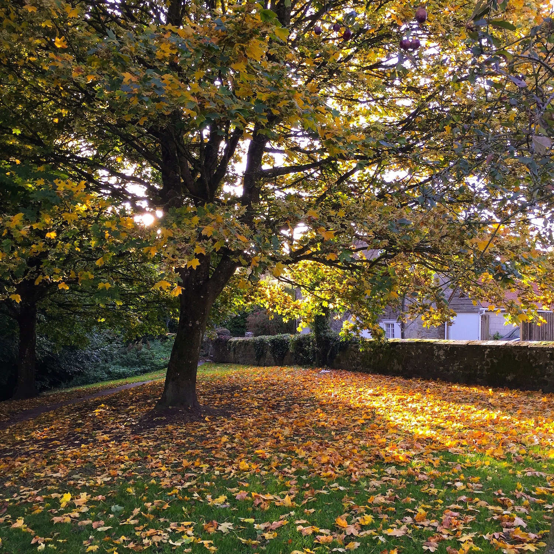 Trees in Autumn. Shaftesbury, Dorset, UK. Photo by Nina Parker