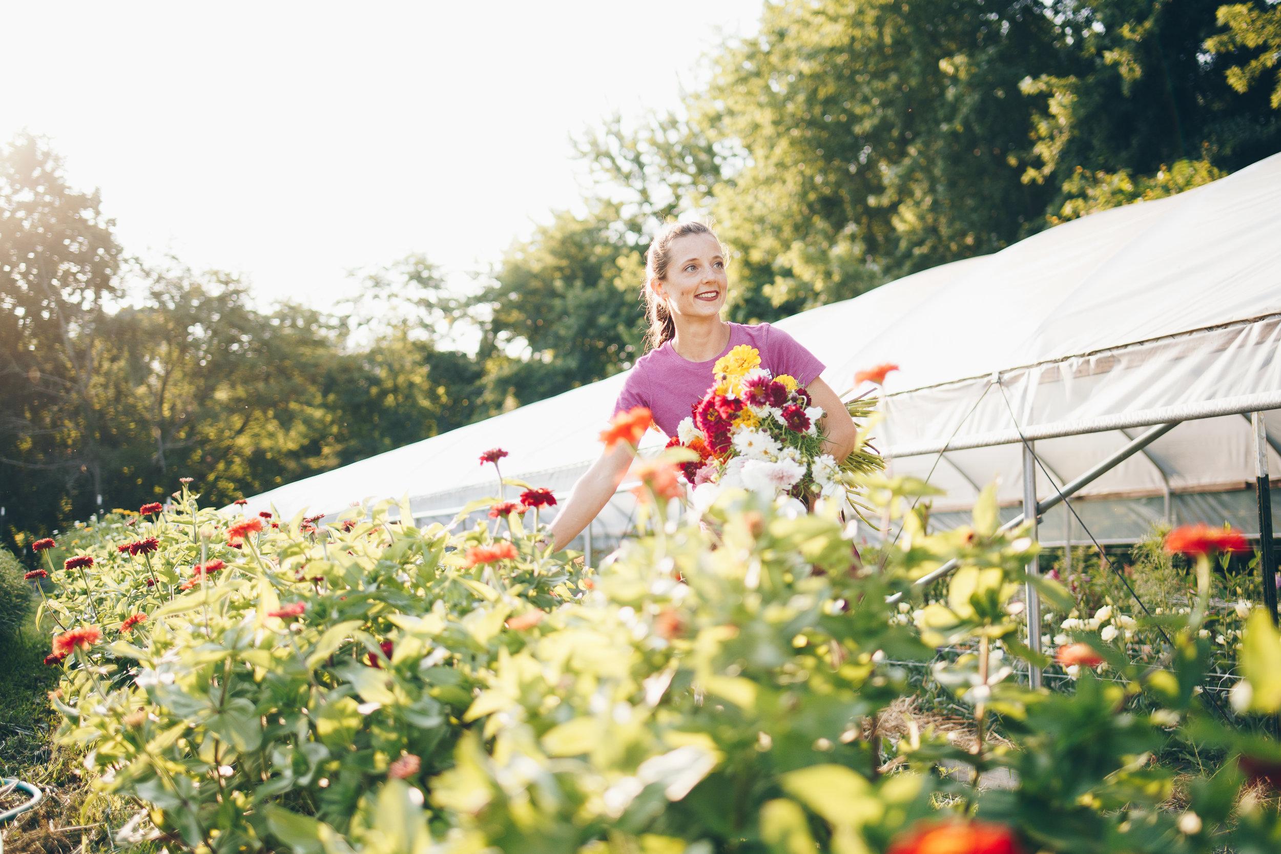 Harvesting Organic Specialty Cut Flowers