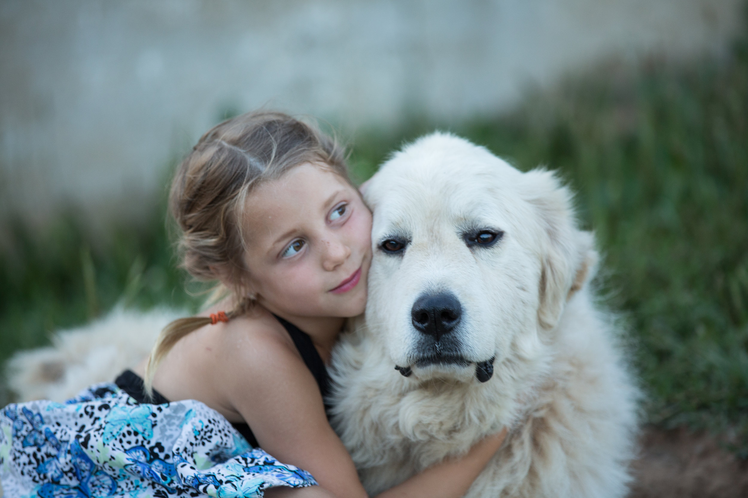 Kid with friendly livestock guardian dog on a flower farm