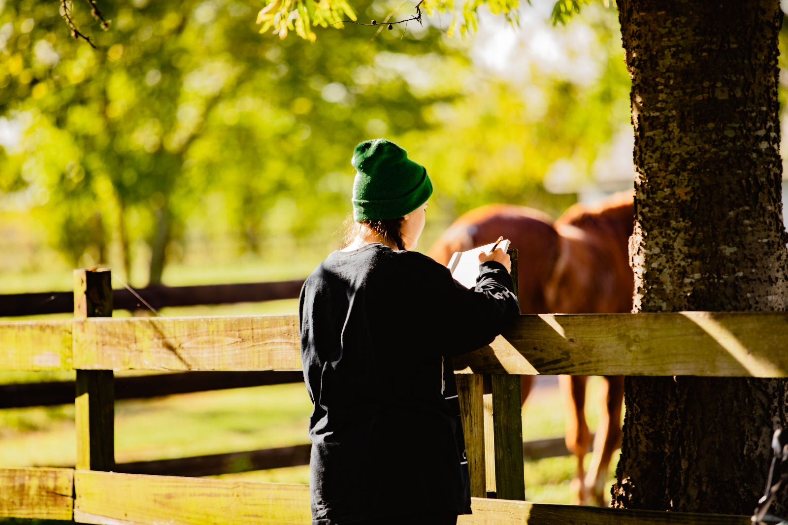 Ali caught me sketching our horse friend -  check out the rest of her photos !