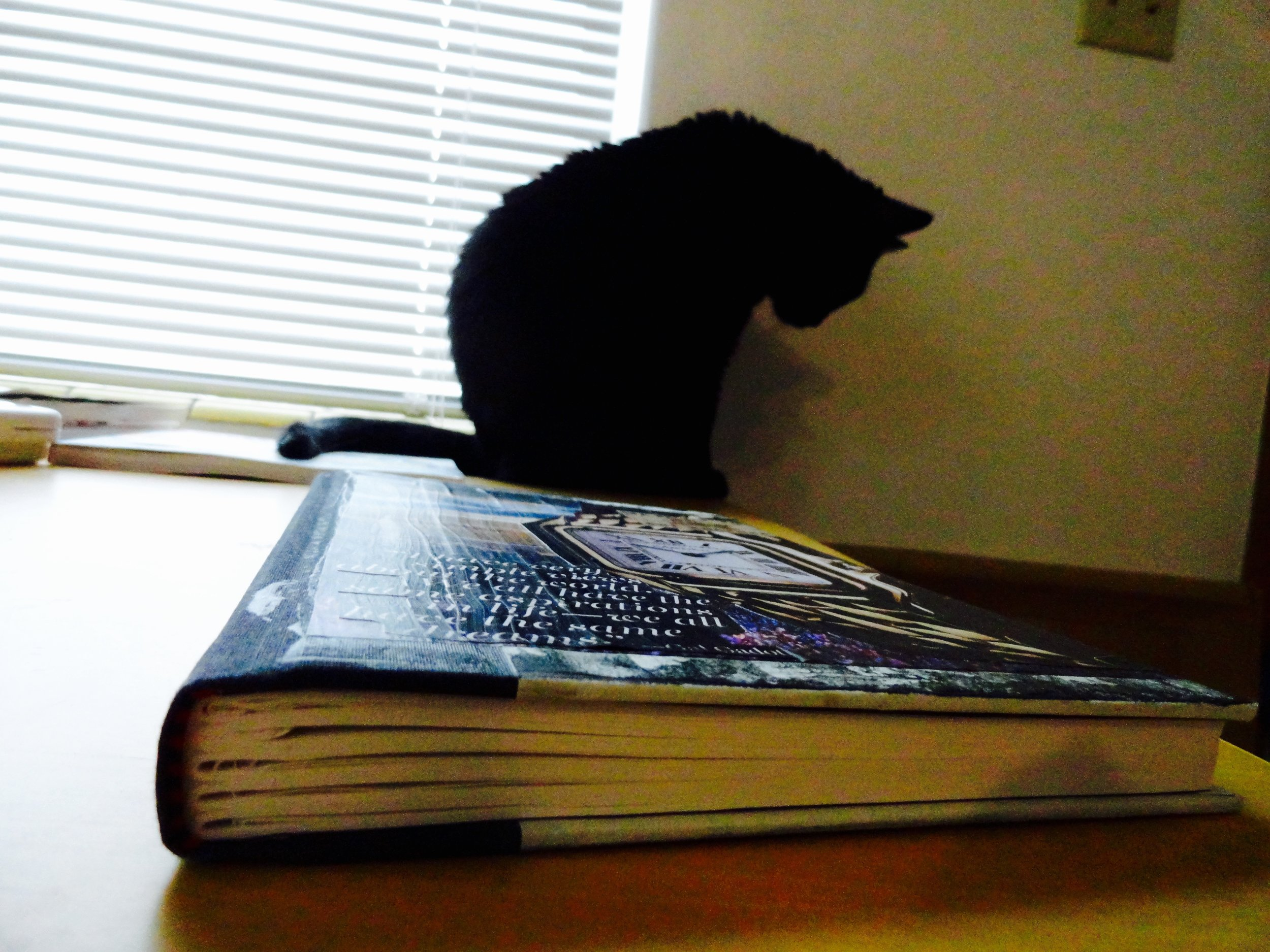 Indy and the new journal
