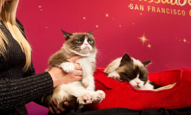 Unveiling Grumpy Cat's wax figure at Madame Tussauds San Francisco, December 2015