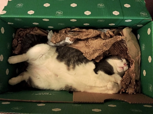 Free kitty toys (kitty loves the packaging and box)
