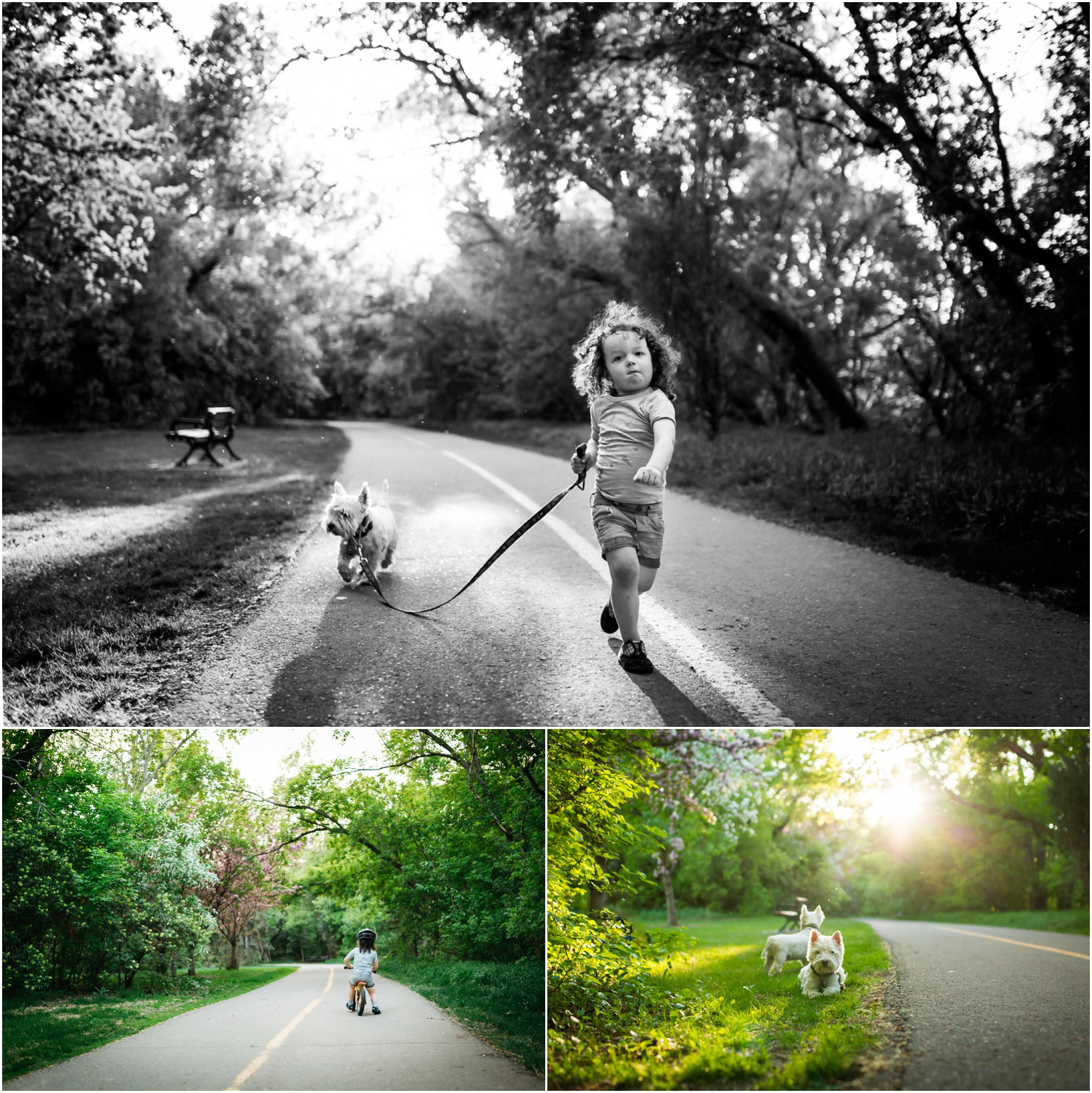 Edmonton Lifestyle Photographer - Best of 2016 - Spring Blossom Week Westie - A boy and his dog - YEG