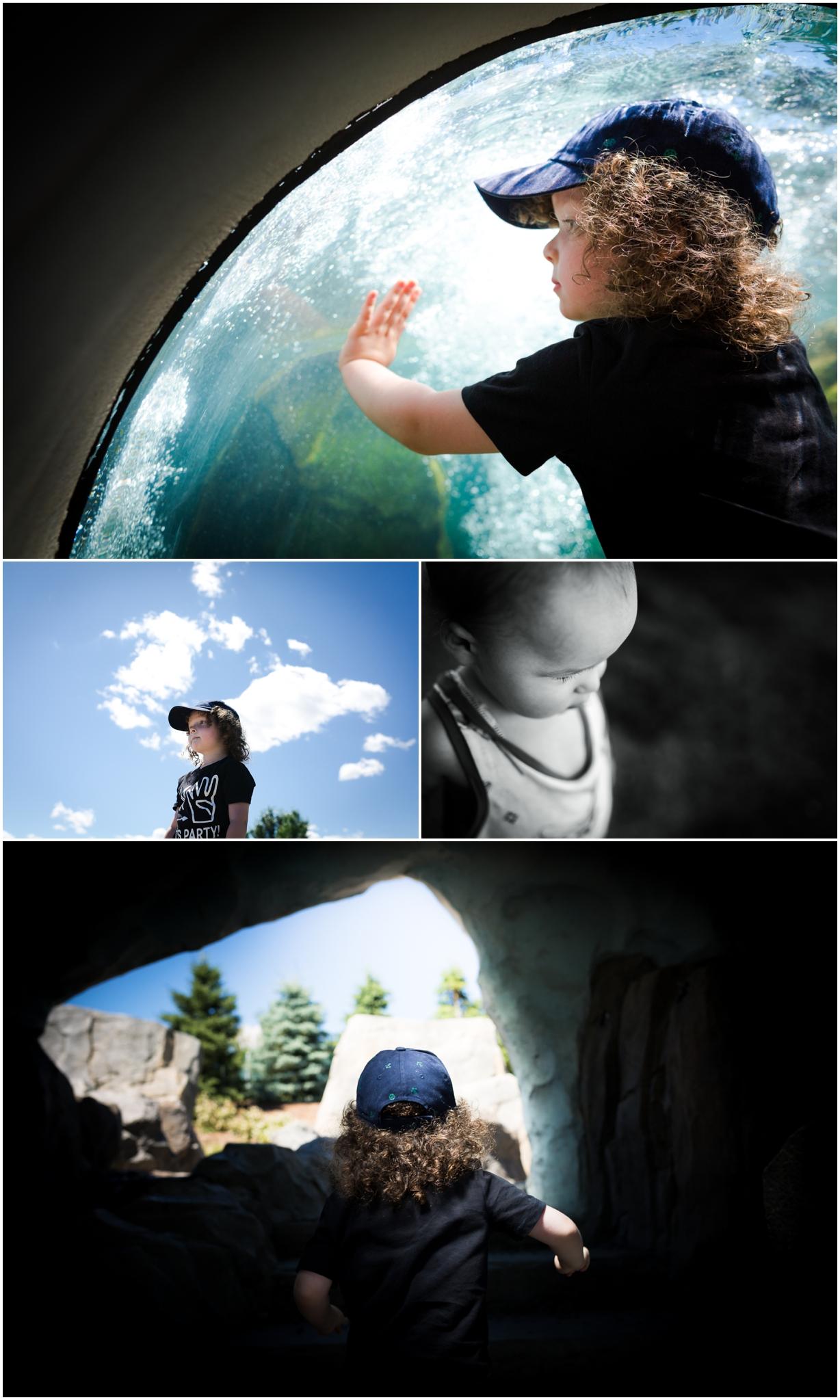 Edmonton Lifestyle Photographer - Elliots Birthday - Edmonton Valley Zoo - YEG ZOO - Summer time