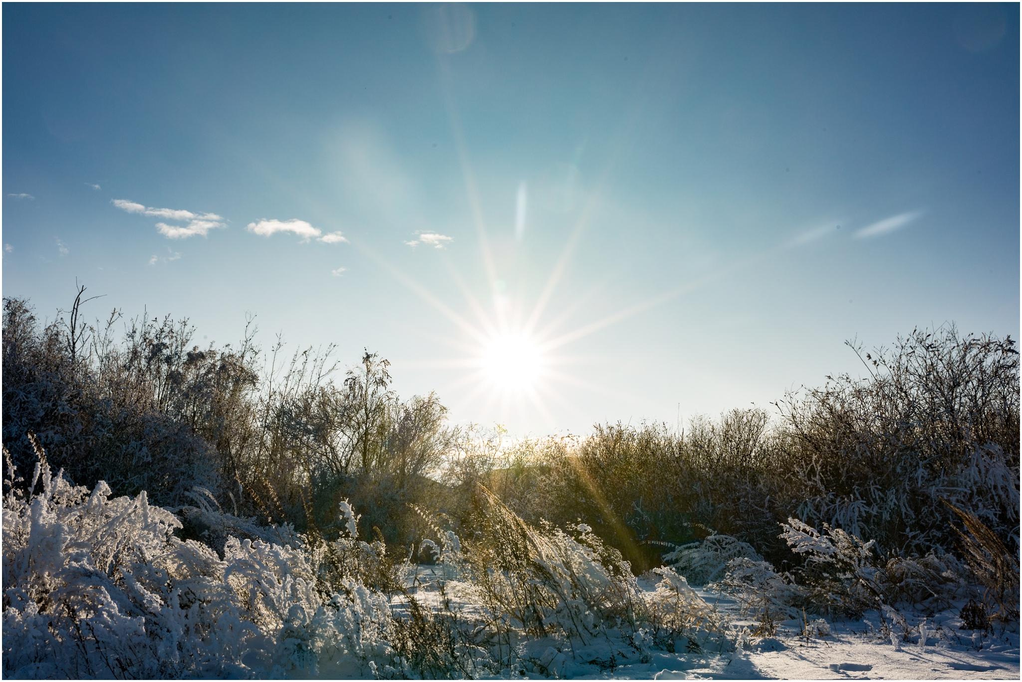 Treelines Photography - Edmonton Photographer - Sunflare - Edmonton Winter