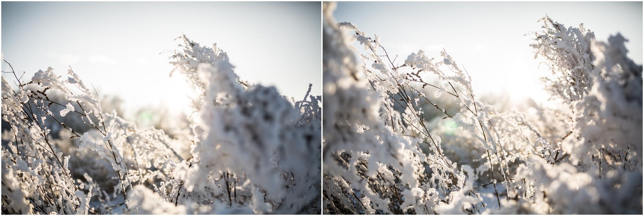 Treelines Photography - Edmonton Photographer