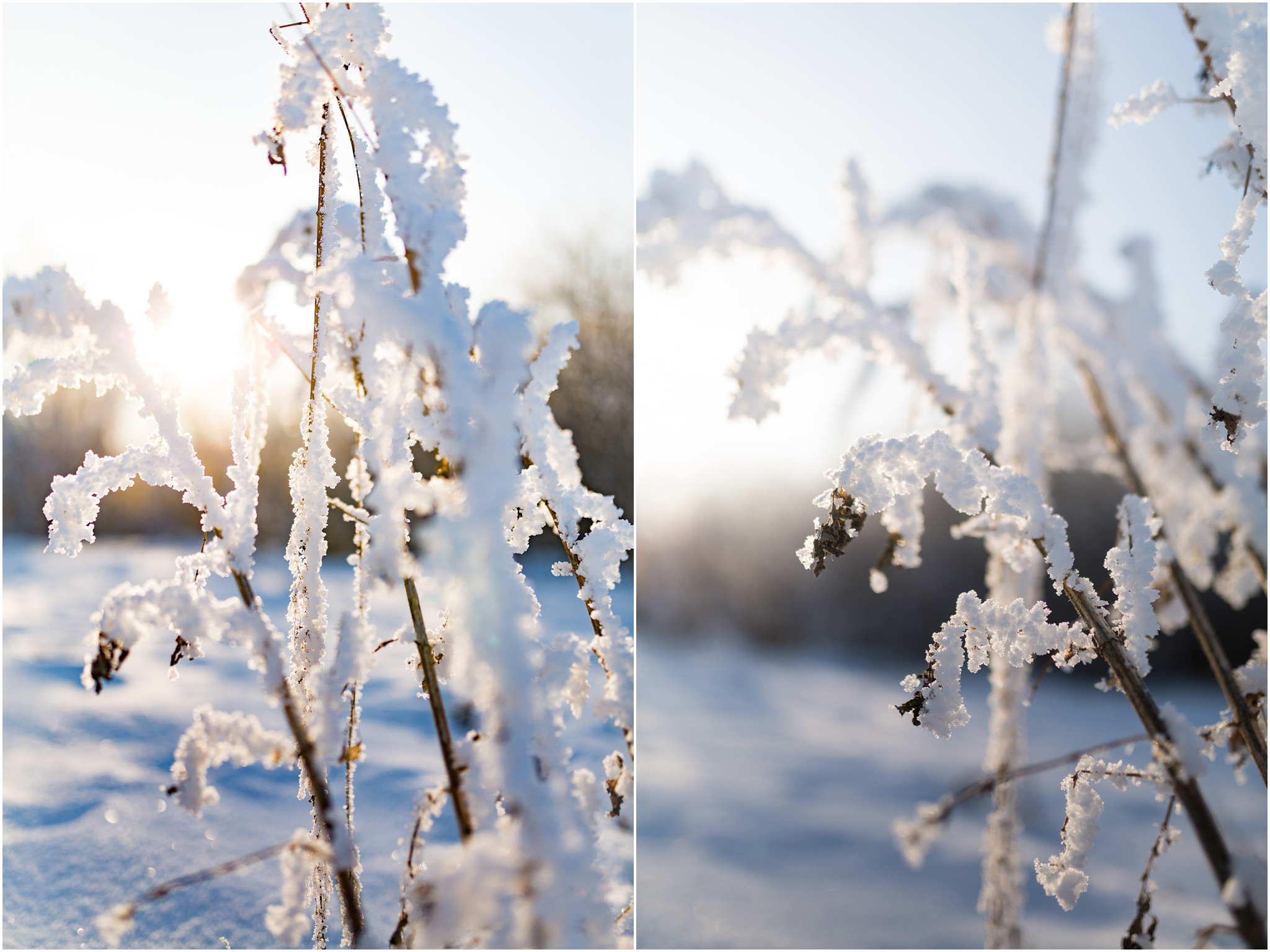 Treelines Photography - Edmonton Photographer - Edmonton Hoar Frost - YEG Winter