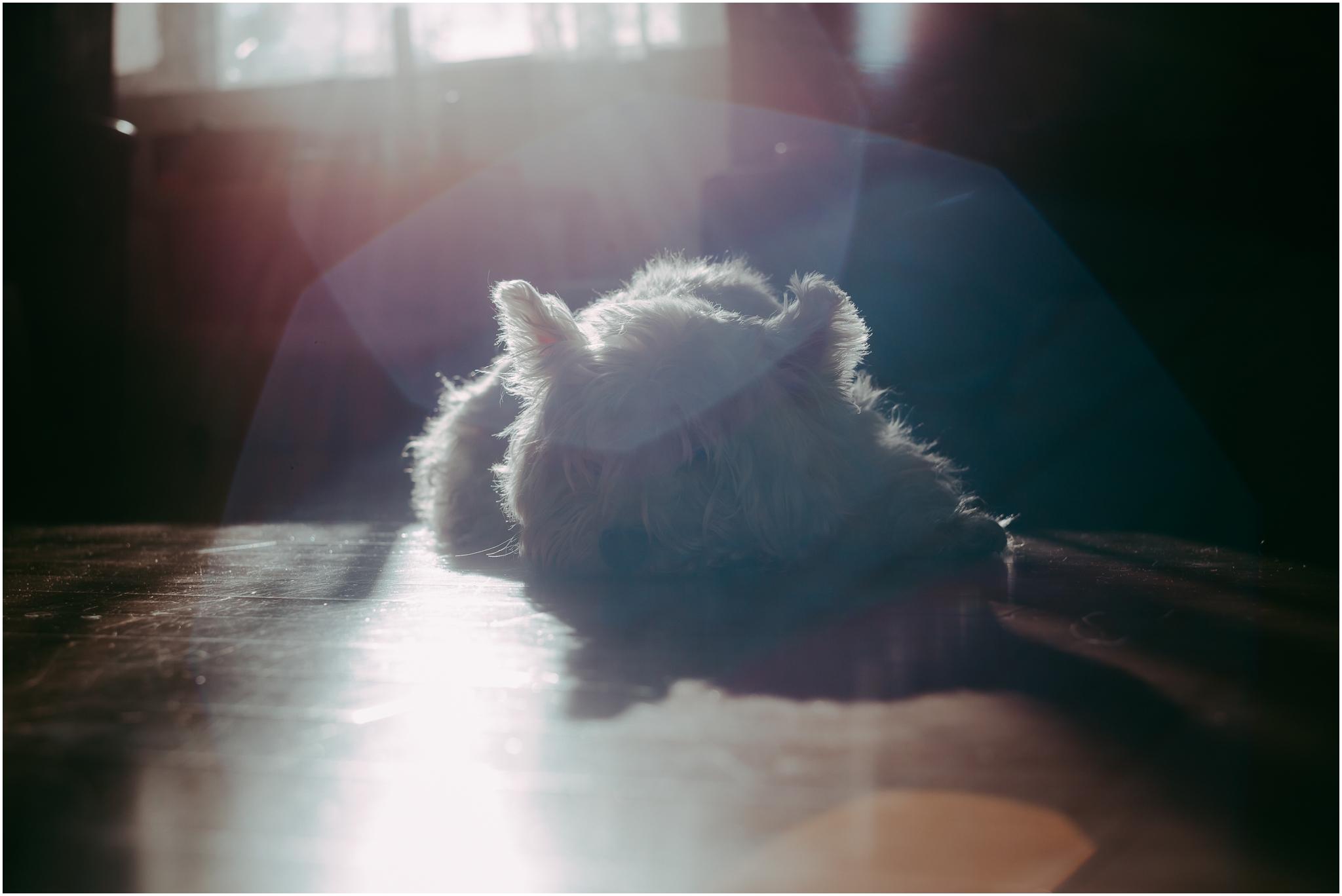 Treelines Photography - National Puppy Day 2017 - Edmonton Photographer