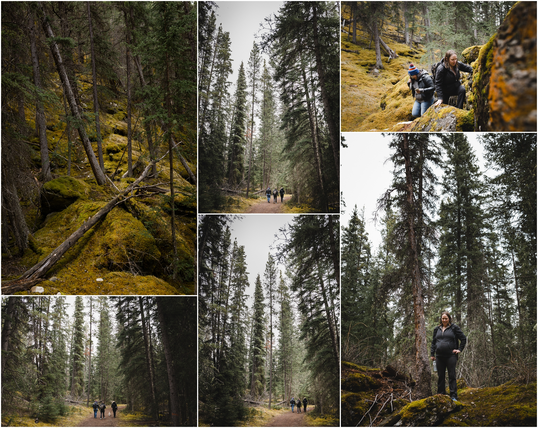 Jasper National Park - Alberta - Old Fort Point - Hiking - Rocky Mountains - Forests of Canada - Treelines Photography