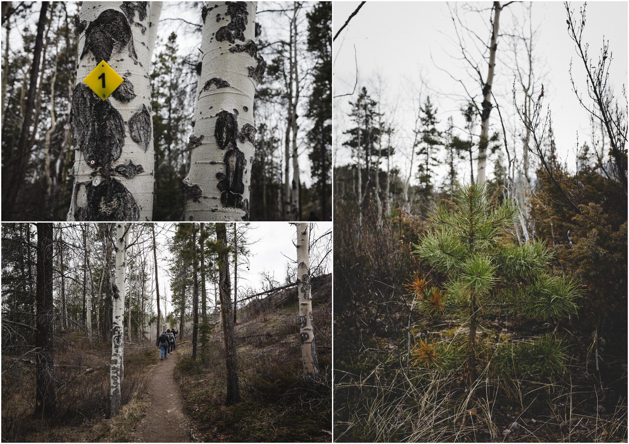 Jasper National Park - Alberta Canada - Old Fort Point - Hiking Trail - Evergreen Tree - Treelines Photography