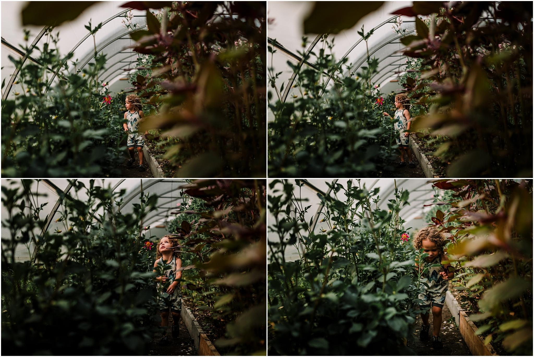 Treelines Photography - Edmonton Family Photographer - Birchwood Meadows Flower Farm
