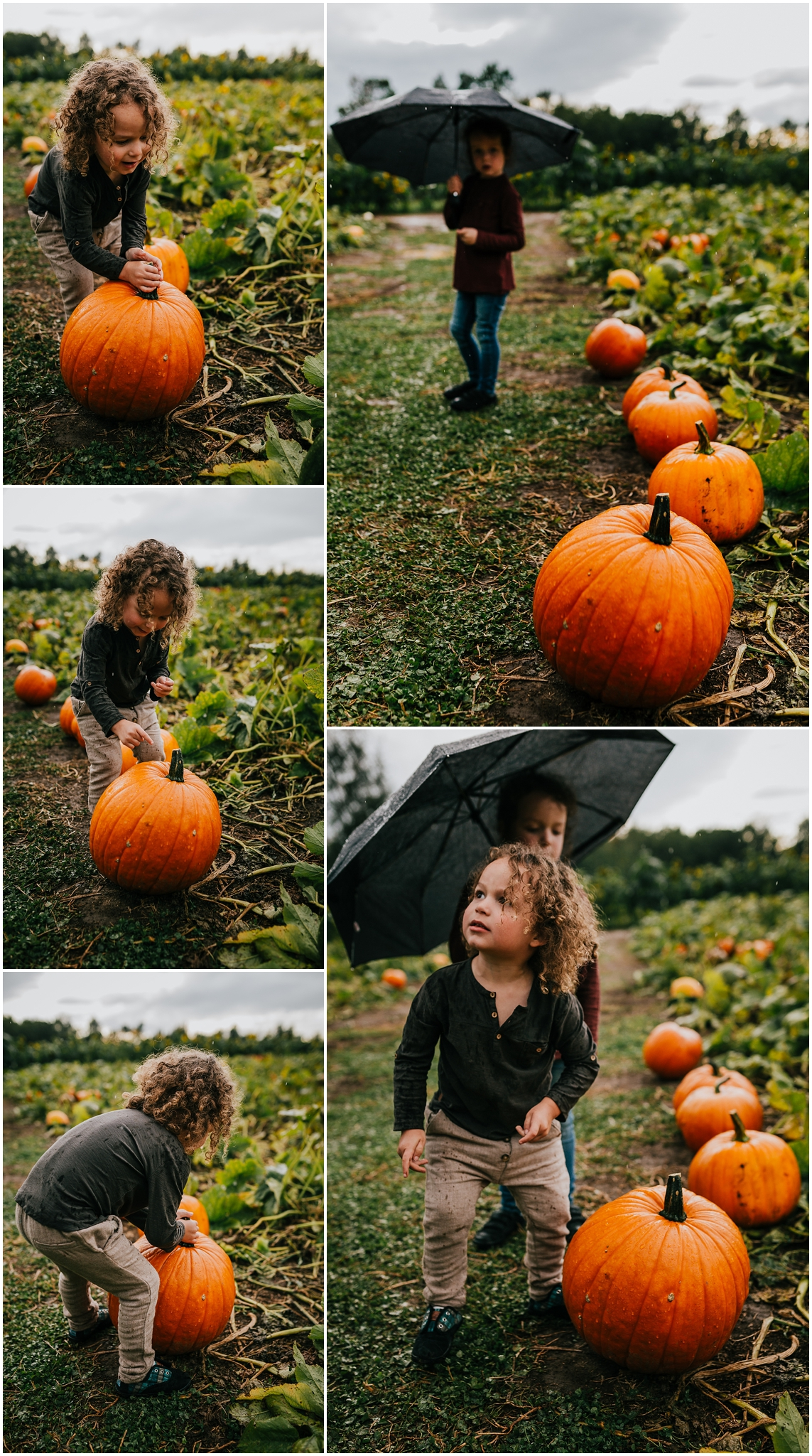 Treelines Photography - Edmonton Family Photographer - U-Pick Pumpkins - Halloween Edmonton
