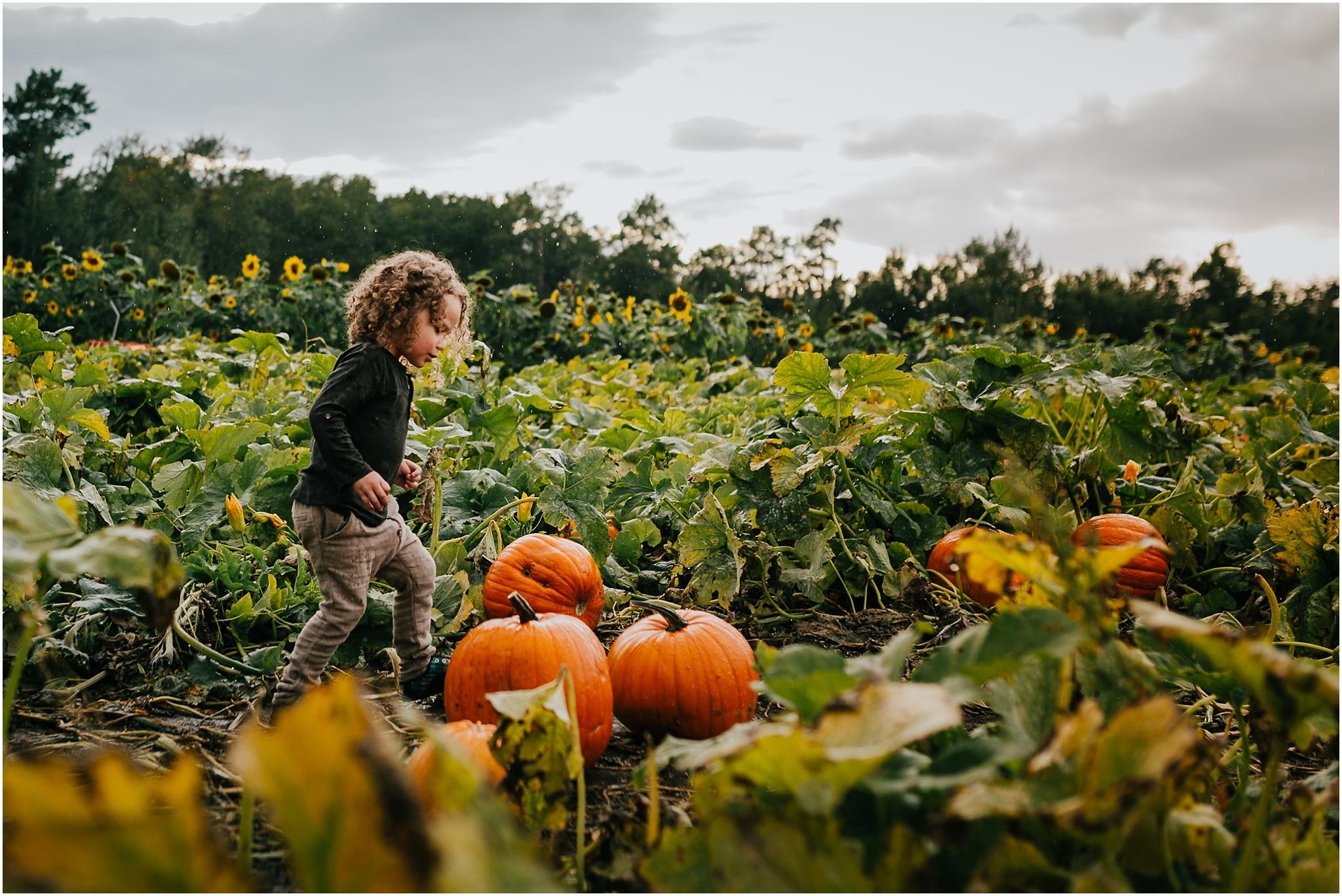 Treelines Photography - Somerset Farms - Edmonton Photographer
