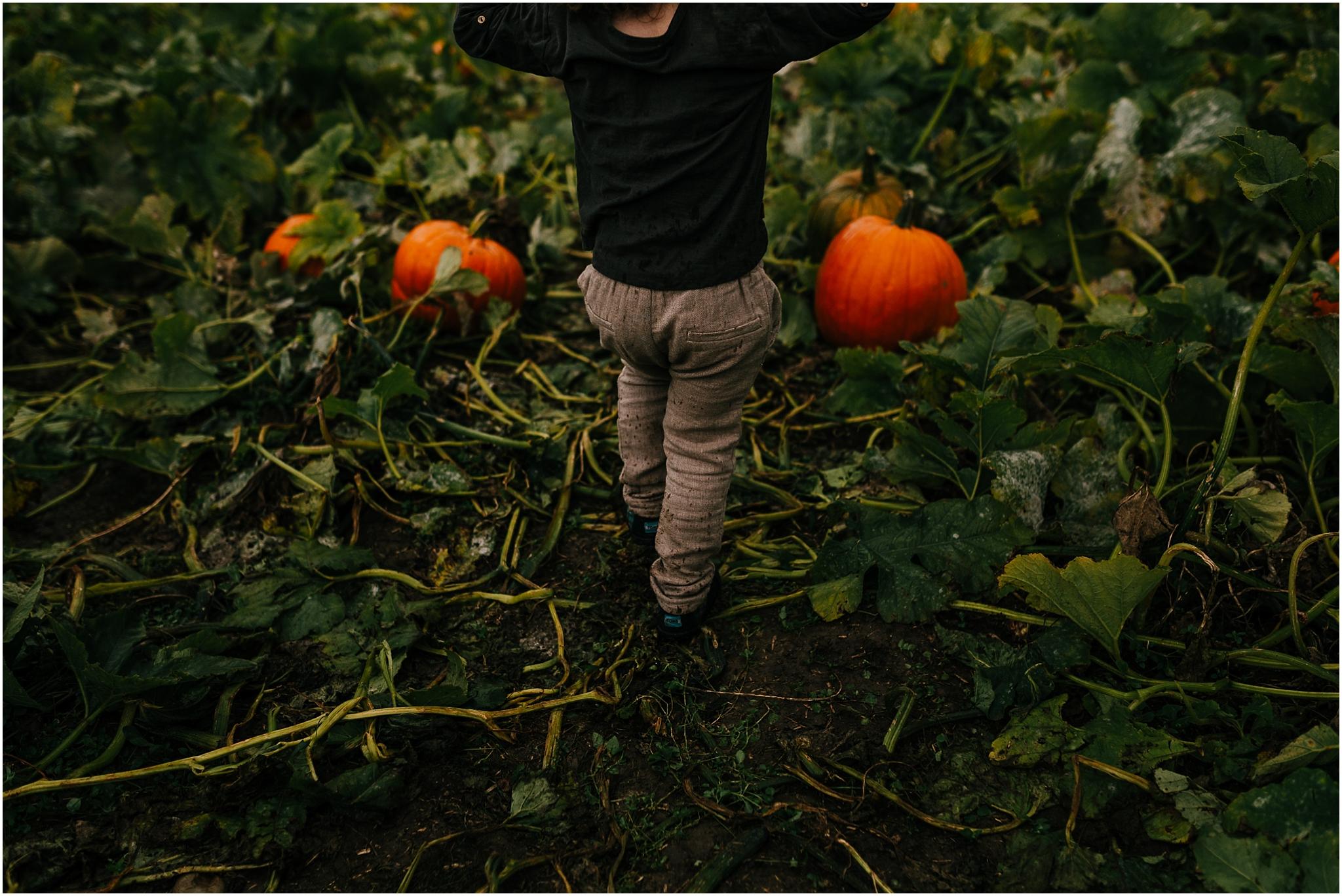 Treelines Photography - Pumpkin Picking