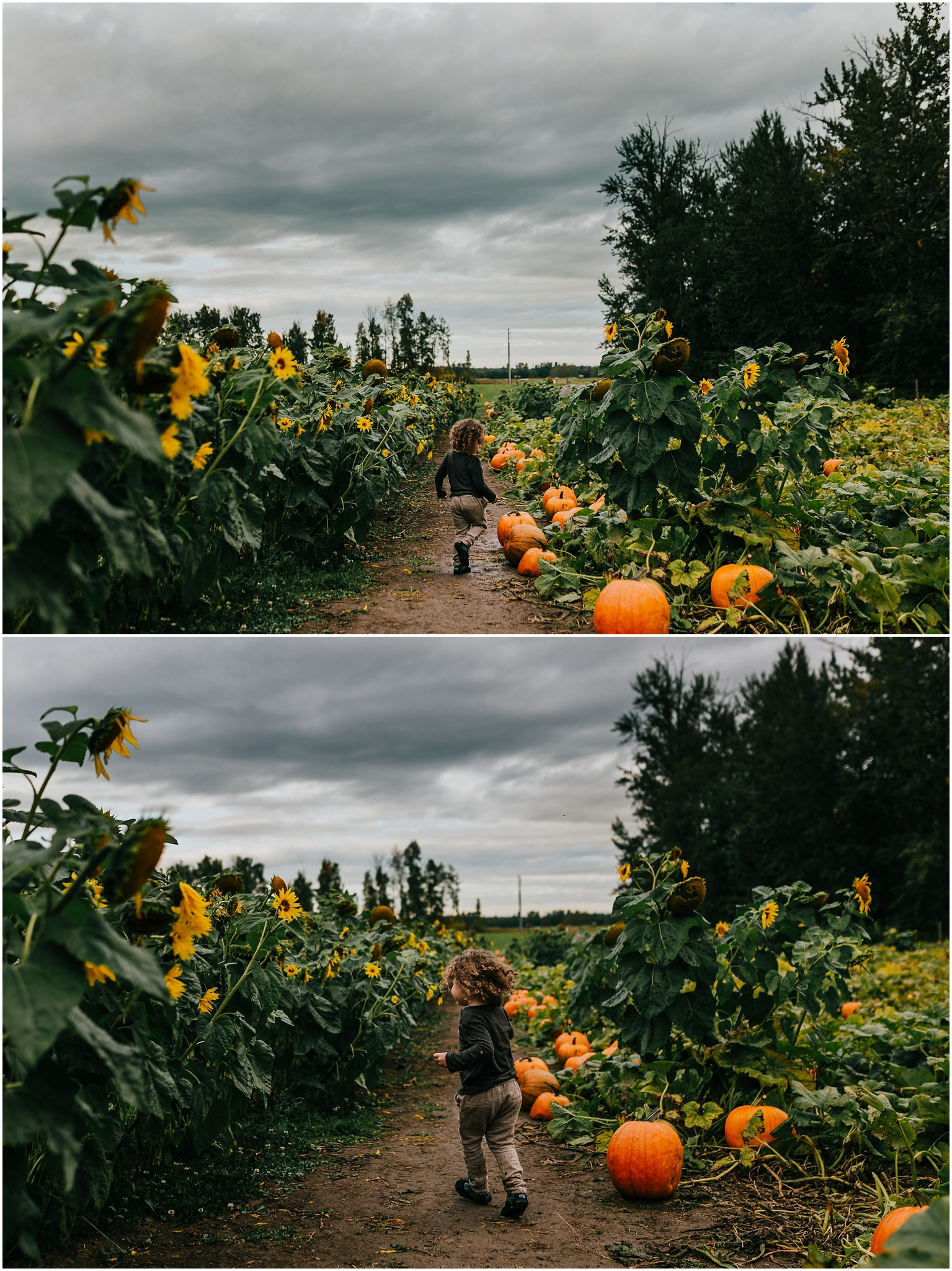 Treelines Photography - Edmonton Family Photographer - Edmonton U-Pick Pumpkins Patch - Adventure Photography
