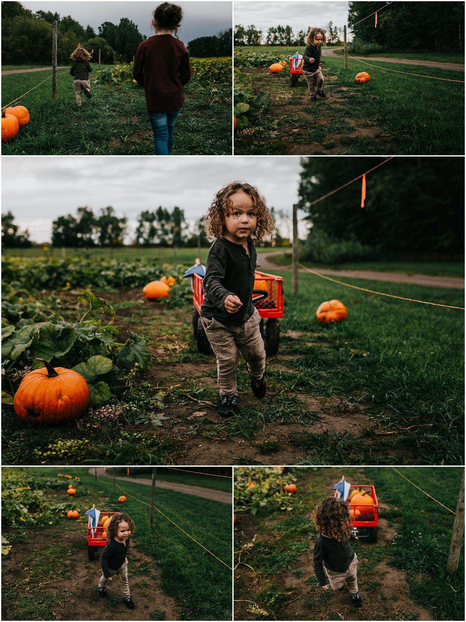 Edmonton Photographer - Treelines Photography - Somerset Farms U-Pick - Pumpkin Patch