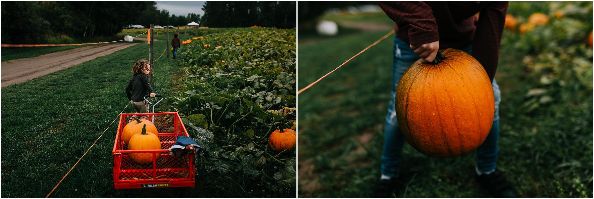 Edmonton Fall Activities Pumpkin Picking u-Pick - Treelines Photography - Edmonton Lifestyle Photographer