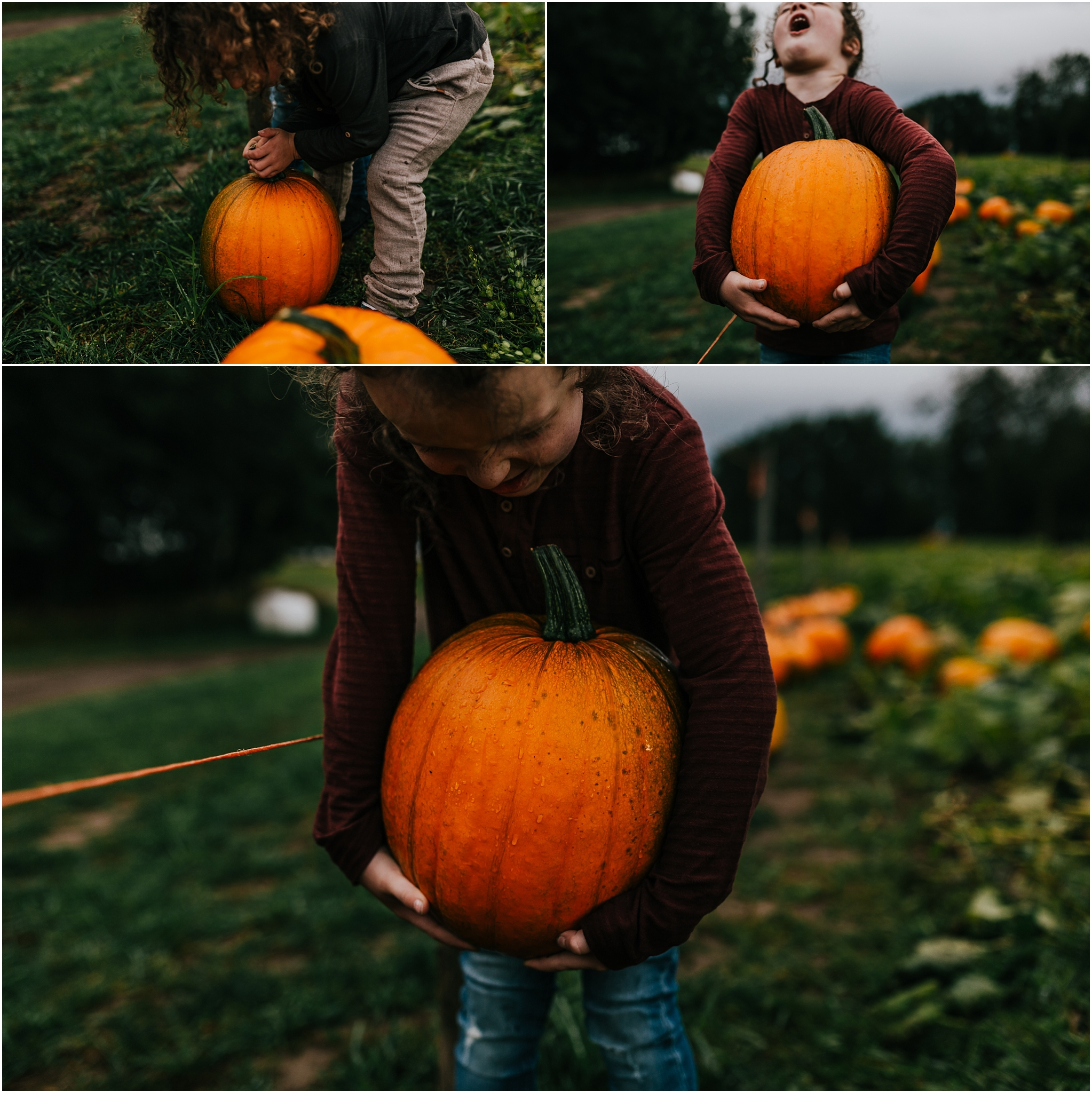 Treelines Photography - Edmonton Lifestyle Photographer - Edmonton Families - Parkland County Pumpkin Patch