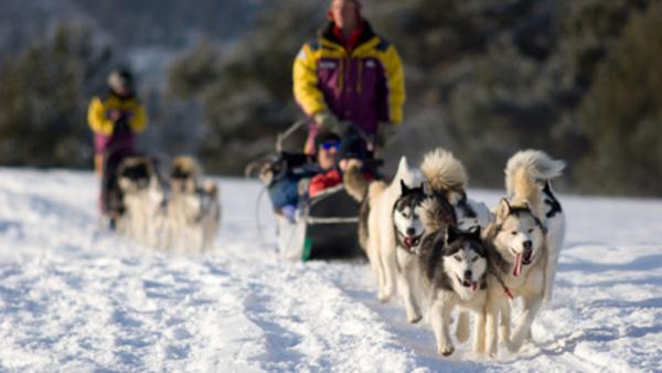 dog-sledding.jpg