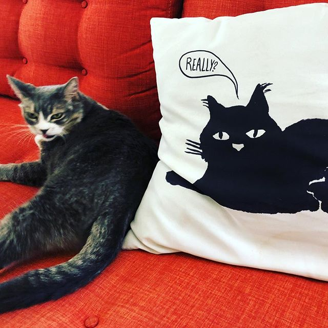 Cat apathy