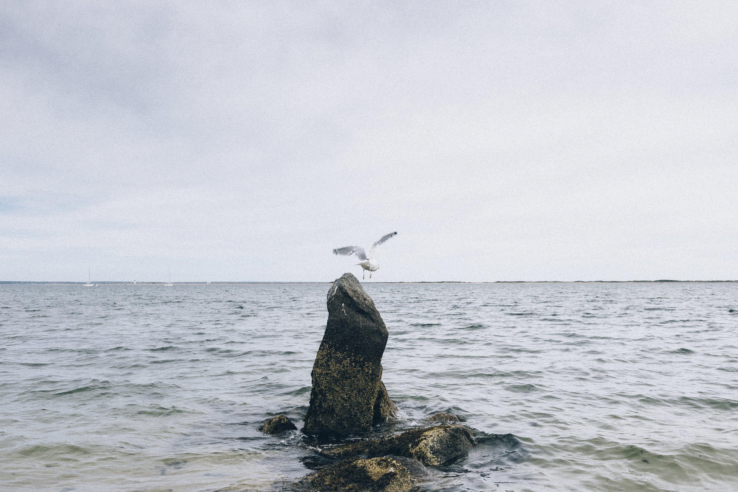 Cape Cod Adrian Morillo_-14.JPG
