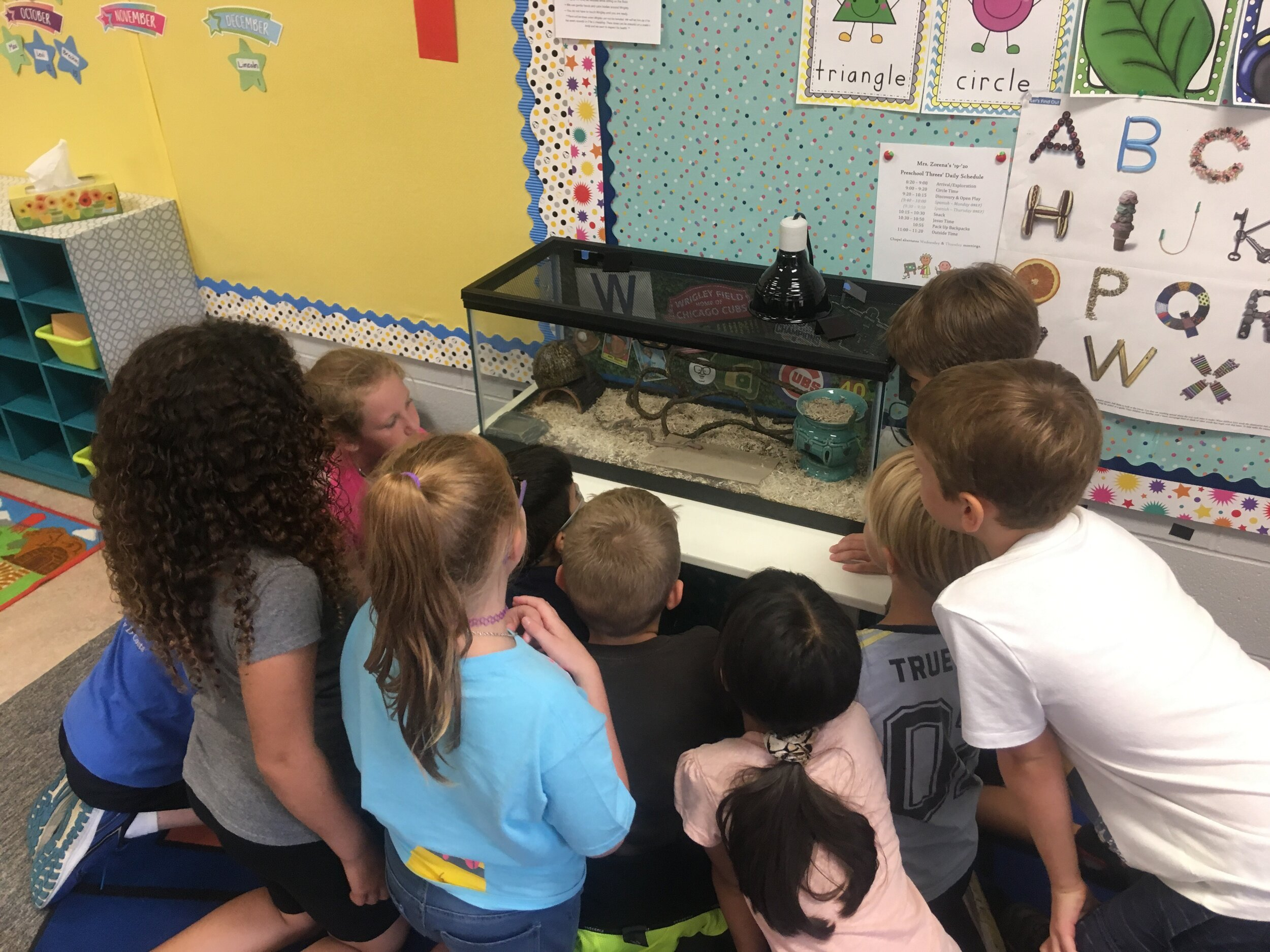3rd grade feeding the snake.jpg