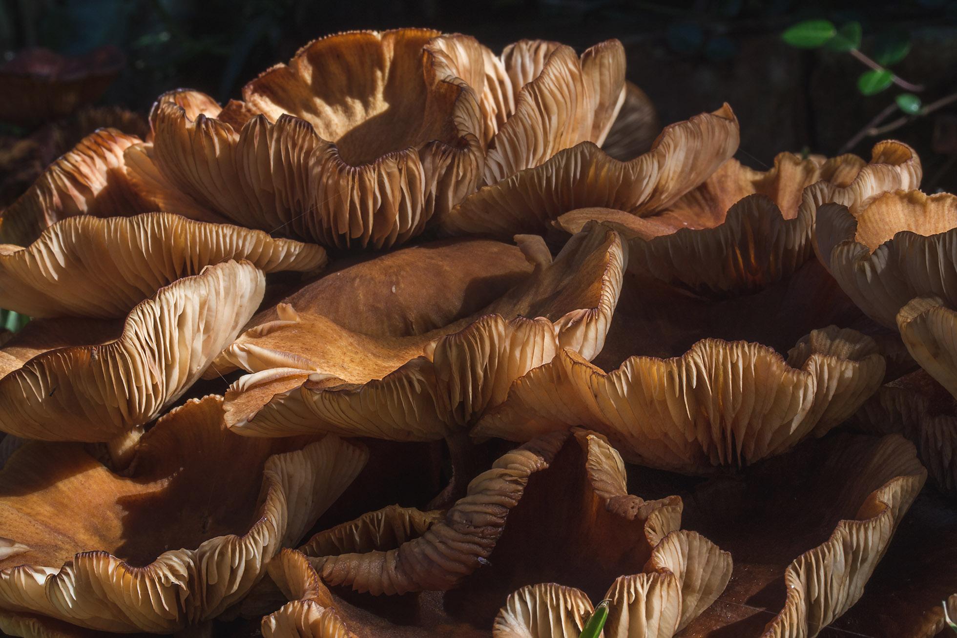 047_mushrooms_IMG_0754a_dp.jpg