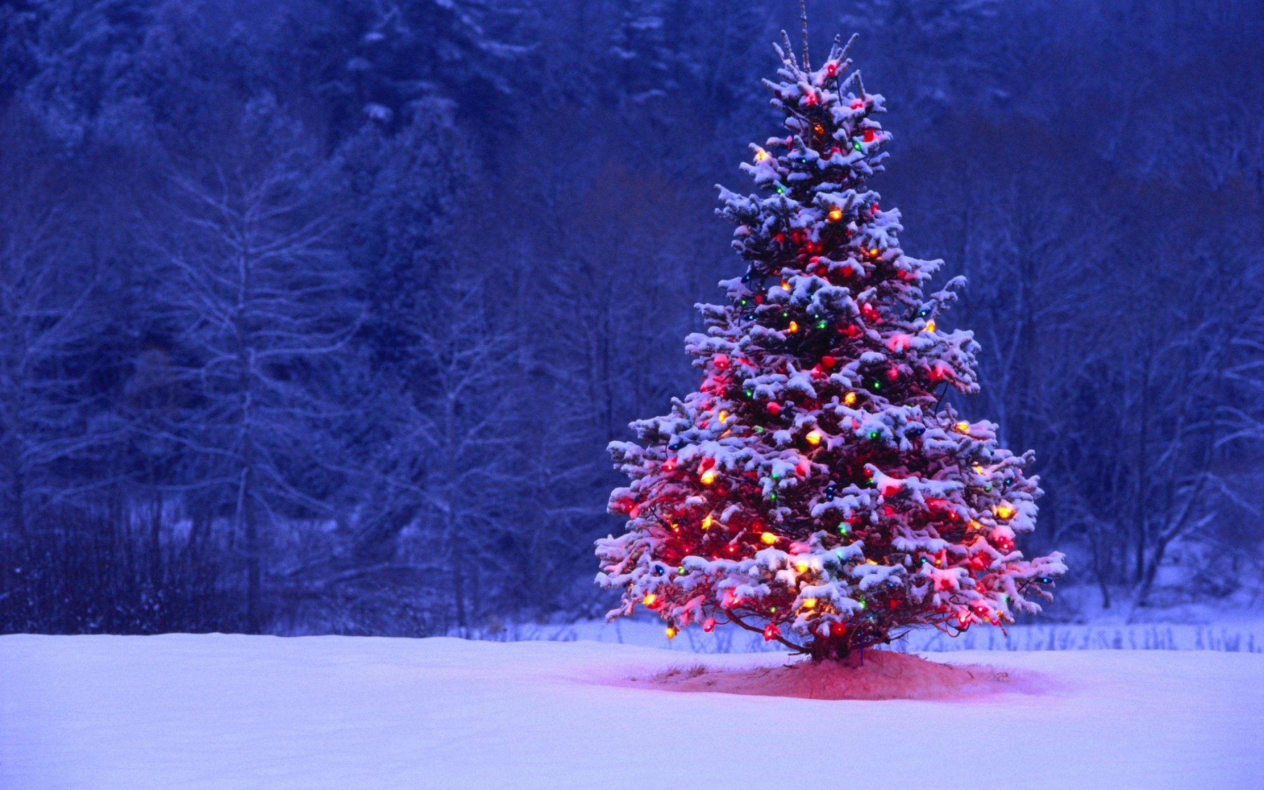 Christmas-Tree-Snow-Forest.jpg