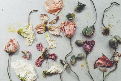 ...still one of my favourite photographs, crumpled poppies.